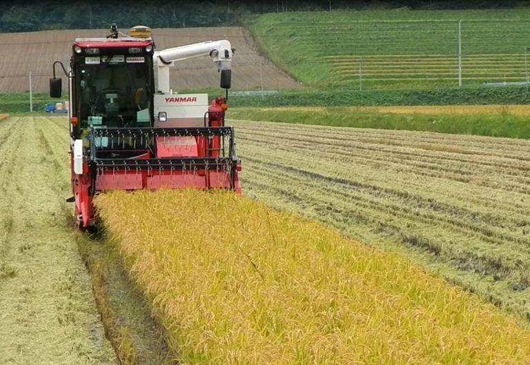 水稲収穫作業2